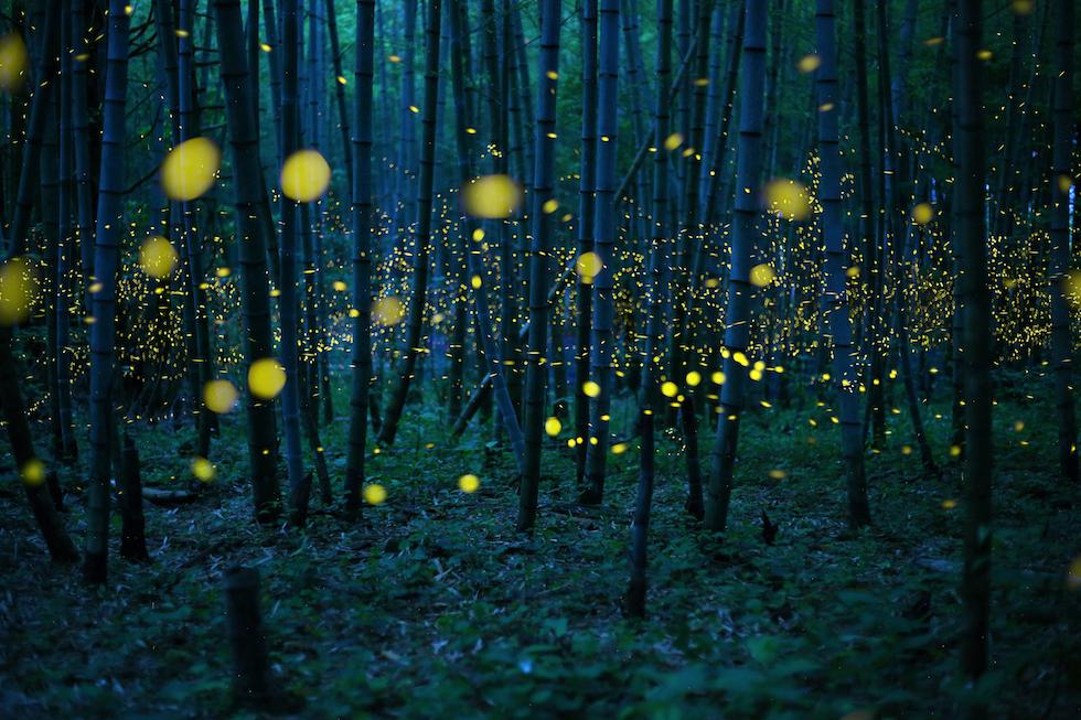 Enchanted Bamboo Lights still fotografia